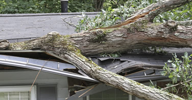 Storm Damage Services